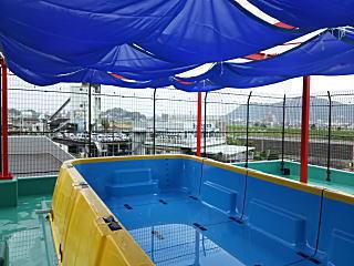 スポーツスタジアムはーと屋上プール